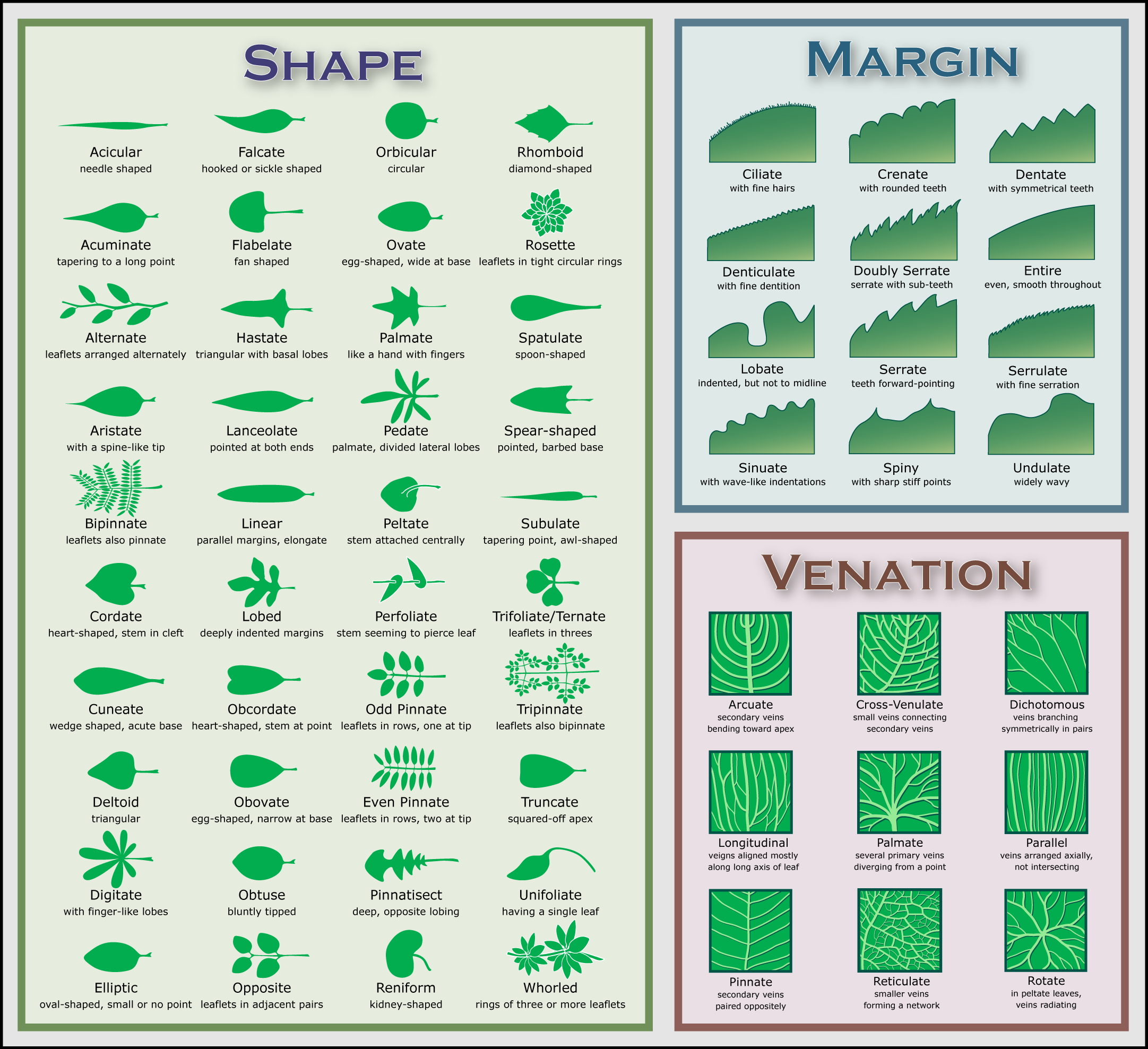 leaf_morphology_